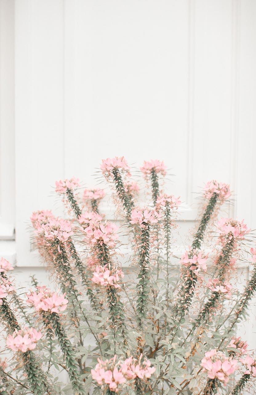 fleurs balade shopping